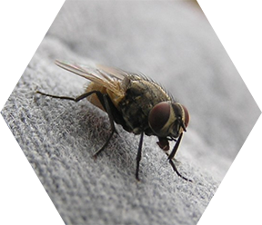 Flying Insects Services in London