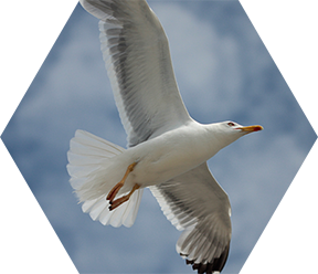 Gull Pest Control in London