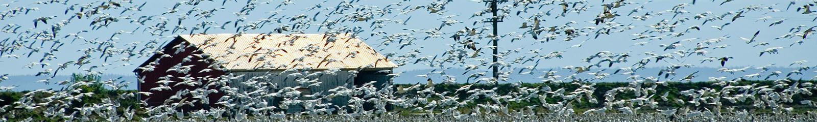 Flock Control